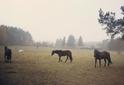 Impressionen Pferde