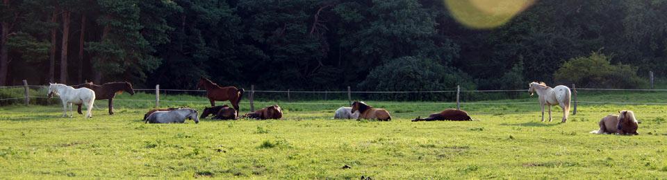 Ideal für Pferdeliebhaber und Pferdeurlaub!