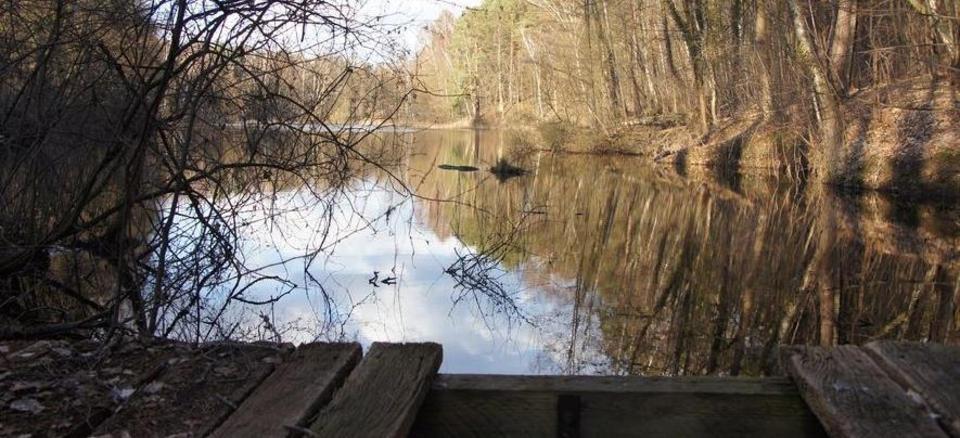 Natur pur - der kleine Tonsee