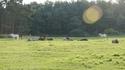 Impressionen Pferdehof am Tonsee