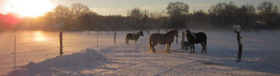 Unsere Ponys genießen die Wintersonne